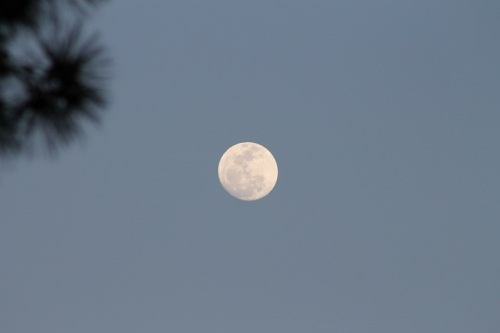 My first photo attempt at a full moon . . .